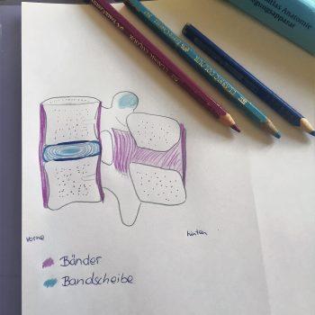 Bandscheibe, Physio inspiriert, Gesundheitsblog, Lendenwirbelsäule